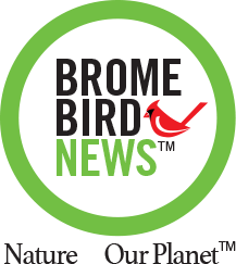 Actualités Brome Bird