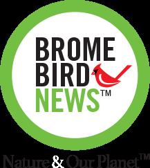 Brome Bird News