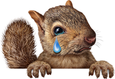 Squirrel Crying