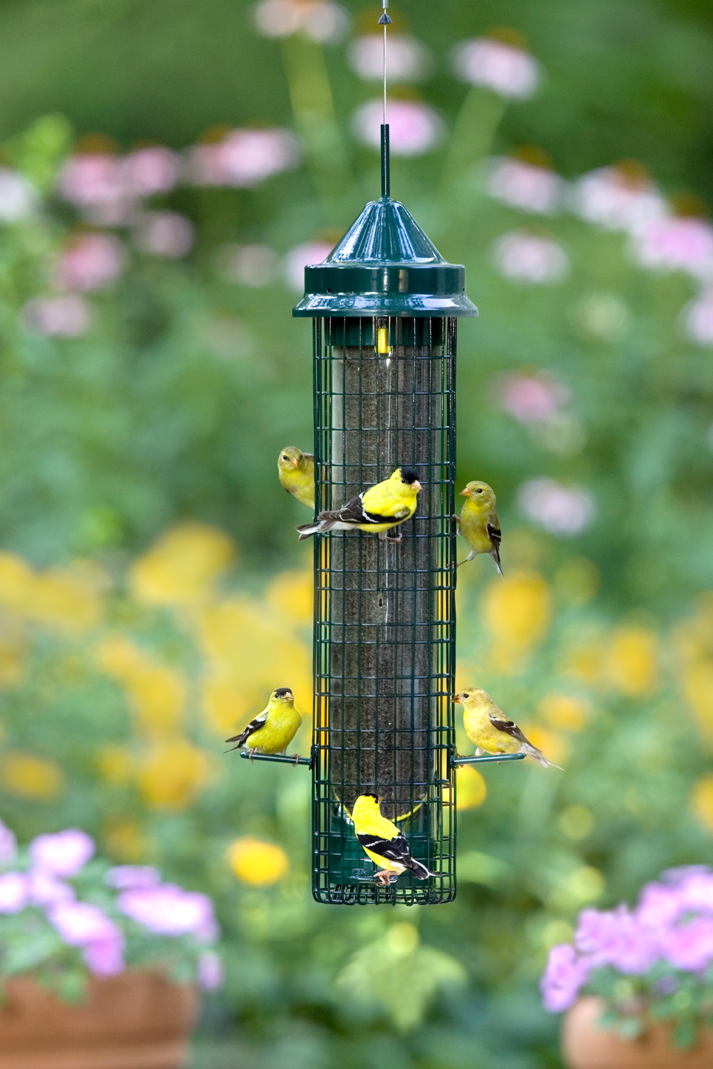 bird montagne feeder la cat de les finch charron amis activity salut cousin en copie jc circuit feeders
