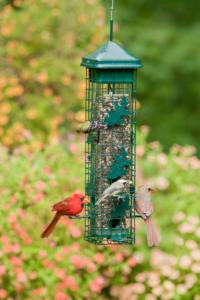 2004_summer_cardinalsSOLUTION200-WEB