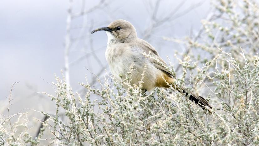 BBN 2-64 – Bird Alarm, Lenses for Bird Photography , Cardinals and Conjunctivitis
