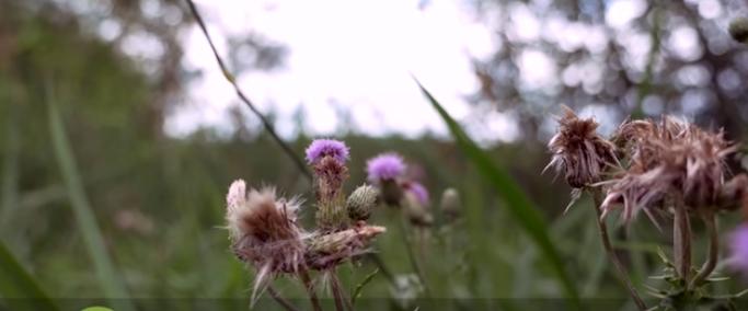 BBN 141 – Goldfinch Nesting Materials