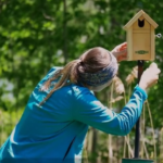 BBN 2-53 Wasps and Bird Houses, Climate Change, American Kestrels as Natural Deterrents