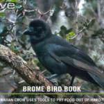 BBN 151 - Audubon Missouri, Do Hawks Eat Grass and Feeder Food Part 2
