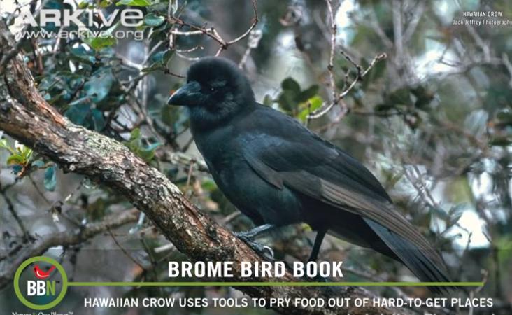 BBN 151 – Audubon Missouri, Do Hawks Eat Grass and Feeder Food Part 2