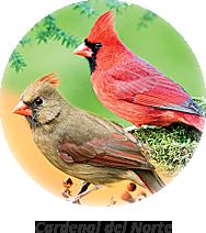 cardenal del norte