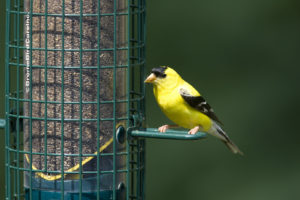1016_Finch_closeup