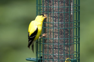1016_Finch_closeup2