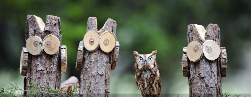 BBN 3-09 Global Big Day, Manage Your Nestboxes, Western Screech Owls and Hummers!