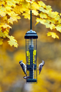 Suet-Fall-Copywrite