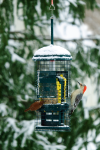 Suet-in-snow-Copywrite