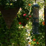 BBN 3-21 - Peanut Mess-Free Bird Feeding, October 19th is October Big Day, Keeping Ants off Your Hummer Feeder