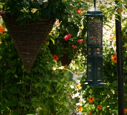 BBN 3-21 – Peanut Mess-Free Bird Feeding, October 19th is October Big Day, Keeping Ants off Your Hummer Feeder