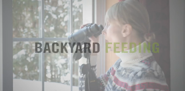 BBN 4-04 – Backyard Feeding – The Great Backyard Bird Count