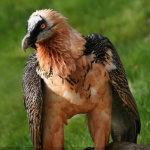 BBN 4-09 - Making Your Own Bird Perches, Rust on Birdfeeders, Brome Bird ID Challenge