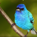 BBN 4-19 - Keep Your Feeders filled with a Varied Menu, Where are my Orioles, The MBTA Saved...