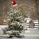 BBN 5-01 - A New Year, A New Season! What To Do With Your Christmas Tree, Transplanting Store-bought Herbs, Mean Geese
