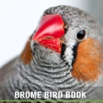 BBN 5-04 - Finch Irruption, Effects of Traffic Noise on Birds
