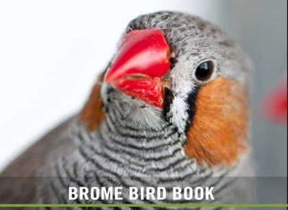 BBN 5-04 – Finch Irruption, Effects of Traffic Noise on Birds