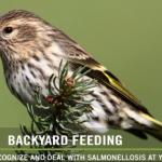 BBN 5-05 - Salmonellosis, Hawks Scaring Feeder Birds, Coffee Grind Spa Treatment