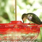BBN 5-14 - All About Nectar, A Bird-Safe Paint for Birdbaths and How Many Birds Are There?