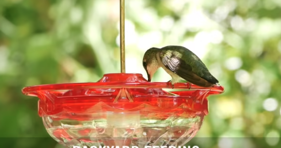 BBN 5-14 – All About Nectar, A Bird-Safe Paint for Birdbaths and How Many Birds Are There?
